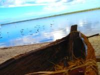 STORYPLACE: Noosa Everglades